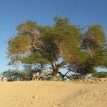 «Дерево жизни»