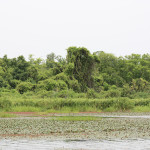 Биосферный резерват Мар-оз-Иппопотам