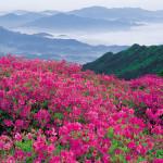 Долина Роз у подножия гор Стара Планина