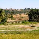 Рисовые поля (Баукау)