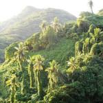Тафуна (о. Тутуила)
