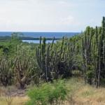 Биосферный заповедник Гуаника
