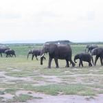 Большой Национальный парк Янкари