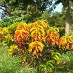 Ботанический Сад Доминики