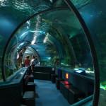 Гуамский океанариум