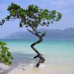 Живой герб Кокосовых островов