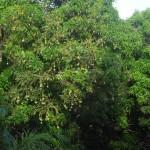 Камбуи-Хиллз