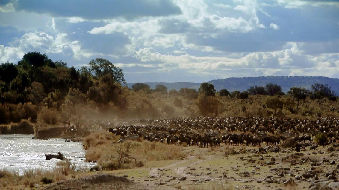 Republic of Kenya (Национальный парк Масаи-Мара)