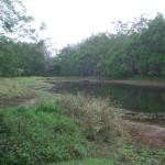 Лесное озеро в Национальном заповеднике Варирата