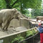 Литовский зоопарк в Каунасе