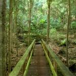 Национальный Парк Норфолка
