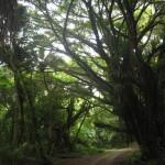 Национальный исторический парк пелелиу