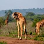 Национальный парк Акагера