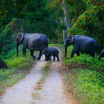 Национальный парк Казиранга (штат Ассам)