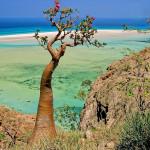Остров Сокотра, Сана