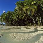 Пальмовый лес на острове Каула