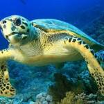Подводный мир Килинга
