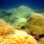 Подводный мир атолла