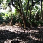 Поселение чаморро Mochong Latte Stone Village (остров Рота)
