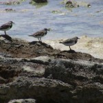 Птицы острова