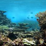 Риф Habitats