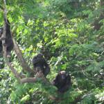 Тропические леса (Монровия)