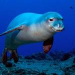 Тюлени у берегов Мидуэй
