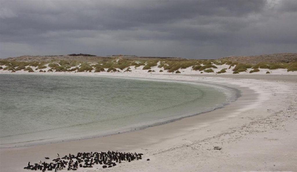 Джипси-Коув (Фолклендские острова)