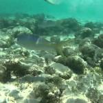 Coral Gardens Reef в Морском национальном парке имени принцессы Марии