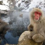 Парк обезьян Дзигокудани (Нагано)