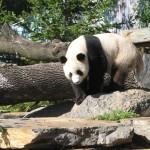 Зоопарк Аделаиды