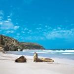 Пляжи в Аделаиде
