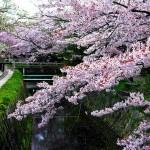 Садовые и парковые зоны Киото