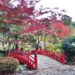 Фруктовый сад в Атами