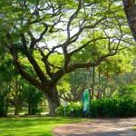 Ботанический сад им. Джорджа Брауна (Дарвин)