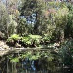 Национальный Ботанический Сад Австралии (Канберра)