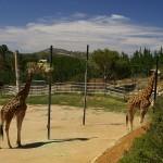 Национальный зоопарк и аквариум в Канберре