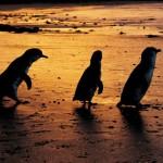 Природный парк «Остров Филипп»
